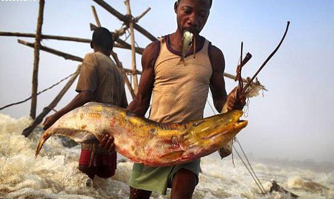 RDC : la FAO réitère son engagement d'accompagner le Ministère de la Pêche et Elevage