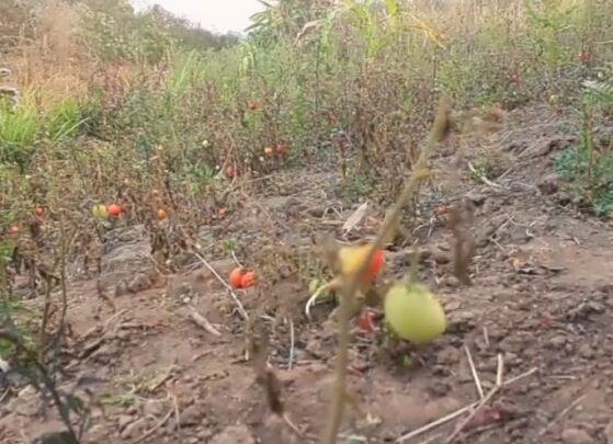 Le parti écologique SOLEIL saisit la justice contre TFM pour pollution de rivières à Kabombwa