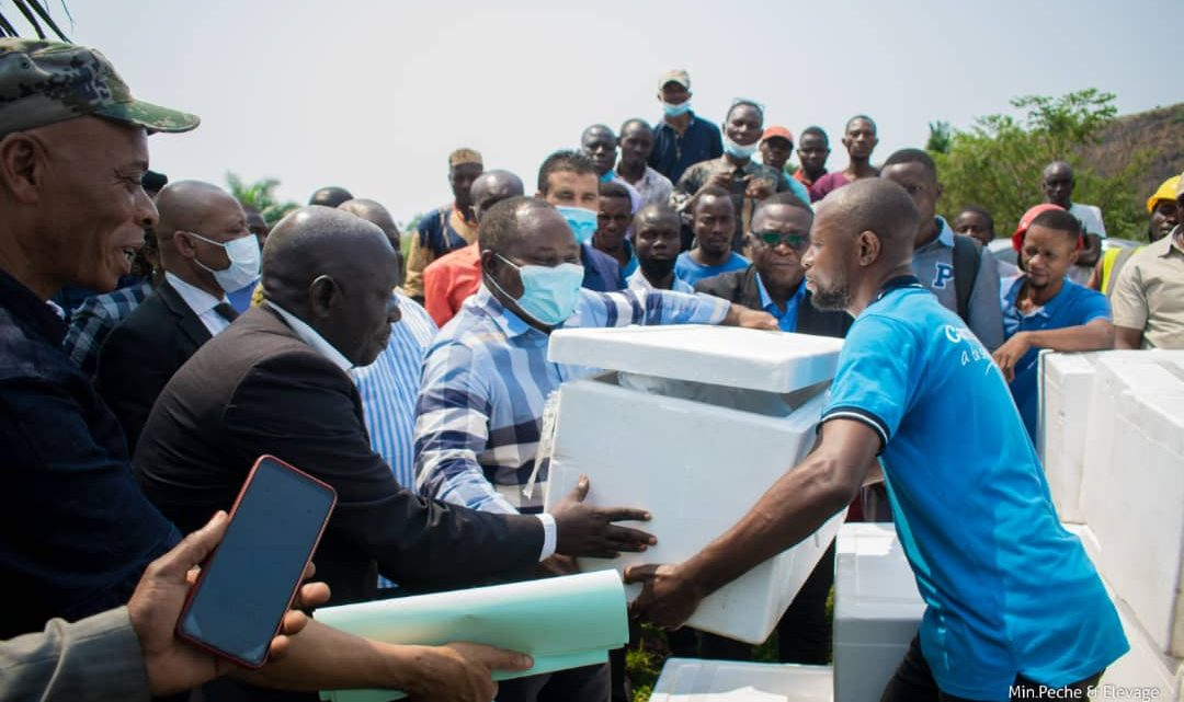 Kinshasa: plus de 200 pisciculteurs de N'sele bénéficient de 7 500 à 15 000 Alevins et leurs aliments par ferme
